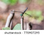 Dragonfly Standing In A Stick