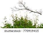 branches of a tree and grass on ... | Shutterstock . vector #770919415