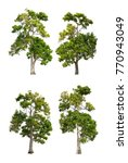 collection pf old tree isolated ...   Shutterstock . vector #770943049