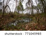 landscape with trees gnawed by...   Shutterstock . vector #771045985