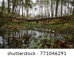 landscape with trees gnawed by...   Shutterstock . vector #771046291