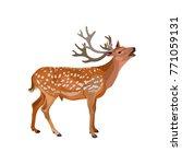 Roaring Deer Stag. Vector...