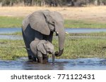 elephant cow with her calf... | Shutterstock . vector #771122431