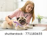 young beautiful female vet... | Shutterstock . vector #771183655