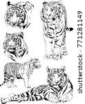 vector drawings sketches... | Shutterstock .eps vector #771281149