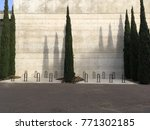very tall green grass trees... | Shutterstock . vector #771302185