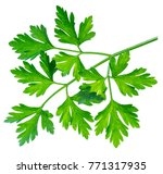 Parsley Herb. Macro Shot Of...