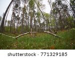 landscape with trees gnawed by...   Shutterstock . vector #771329185