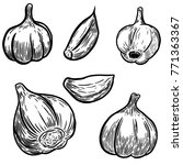 set of hand drawn garlic... | Shutterstock . vector #771363367