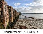 beautiful landscape of... | Shutterstock . vector #771430915