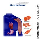 types of muscle tissue | Shutterstock .eps vector #771433624