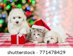 Stock photo group of a bichon frise pupies and kitten in red santa hat on a background of the christmas tree 771478429
