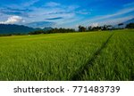 rice field with mountain and... | Shutterstock . vector #771483739