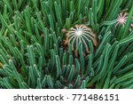 Small photo of Ball shape cacti is surrounded with long shape cacti.