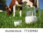 Jug of milk and cow - stock photo