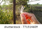 Hand Holding White Hairy Seed...
