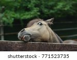 curious and funny horse | Shutterstock . vector #771523735