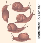 Snails. Design Set. Hand Drawn...