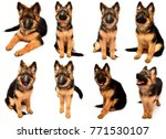 collection fluffy german... | Shutterstock . vector #771530107
