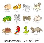 pet shop  set types of pets ... | Shutterstock . vector #771542494