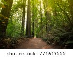nature trail through green... | Shutterstock . vector #771619555