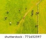 aerial view of grazing horses... | Shutterstock . vector #771652597