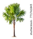 isolated palm tree on white... | Shutterstock . vector #771761845