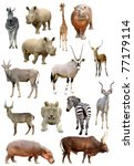 african animals collection... | Shutterstock . vector #77179114
