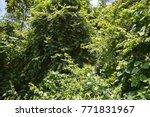 signal mountain park in kota...   Shutterstock . vector #771831967