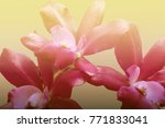 blurred beautiful orchid soft