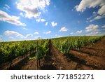 vineyards with beautiful blue...   Shutterstock . vector #771852271