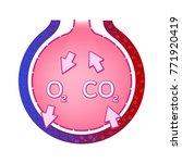 alveolus in lung. gas exchange...   Shutterstock .eps vector #771920419