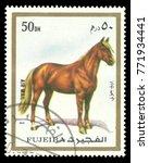 Small photo of Fujairah - stamp printed 1972, Multicolor Memorable issue of offset printing, Topic Fauna and Mammals, Series Animals, Horse, Equus ferus caballus