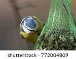 Small photo of Beau regard fix d'une mésange bleue devant ses graines