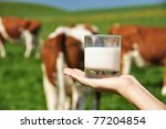 Glass of milk on the hand against herd of cows - stock photo