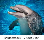 dolphin happy smile | Shutterstock . vector #772053454