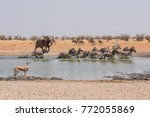 An African Elephant Chasing...