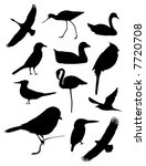 Twelve Bird Silhouettes  ...