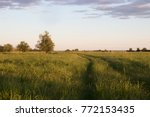 landscape of a field with tall... | Shutterstock . vector #772153435