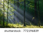 sunbeam entering rich deciduous ... | Shutterstock . vector #772196839