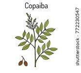 copaiba  copaifera officinalis  ...   Shutterstock .eps vector #772230547