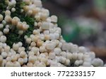 colony of small mushrooms | Shutterstock . vector #772233157