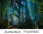 Small photo of Morning light in beautiful jungle garden