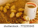chicken poultry farm.white... | Shutterstock . vector #772255345
