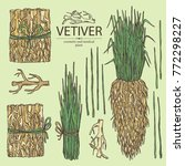 collection of vetiver  root and ... | Shutterstock .eps vector #772298227