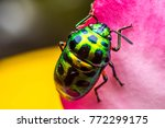 colourful bug from macro... | Shutterstock . vector #772299175
