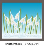 snowdrops cover with snow | Shutterstock .eps vector #77231644