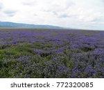 carrizo plain national monument ...   Shutterstock . vector #772320085