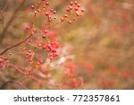 soft focus red holiday berries | Shutterstock . vector #772357861