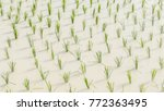 young rice field  | Shutterstock . vector #772363495